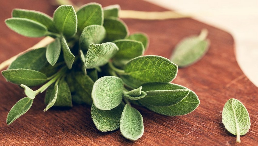 Dry or Fresh Sage: Which One should you use?