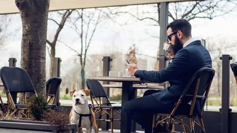 Which Popular Restaurants and Cafés also serve Food for Your Dog?
