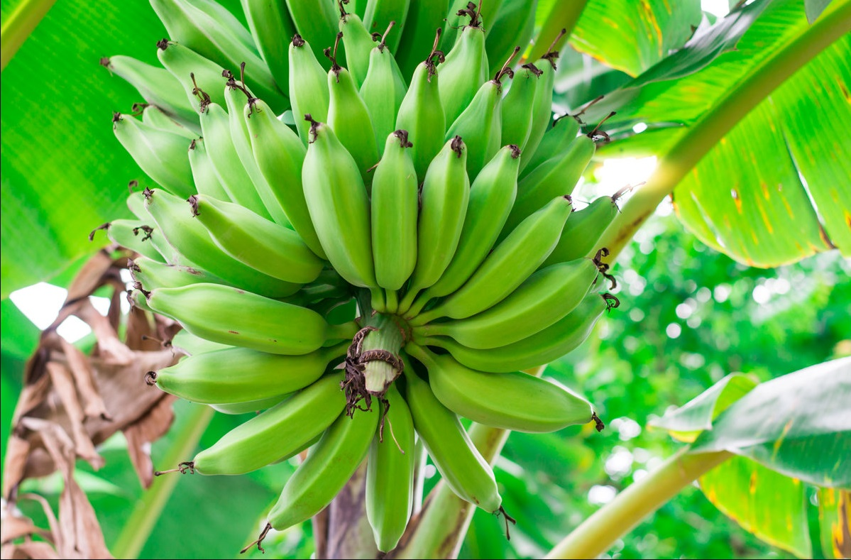 The Ultimate Guide to All Nutrition Facts about Bananas